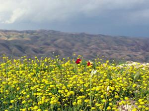 Judean_Wilderness_ISRAEL